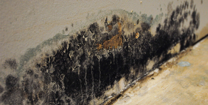 Residential mold removal services in chicago il, servicemaster dsi, mold mitigation