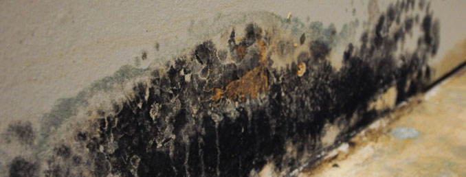 Useful Tips for Mold Damage Protection in your Chicago home