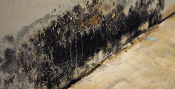 Mold removal & remediation in Rockland county, NY