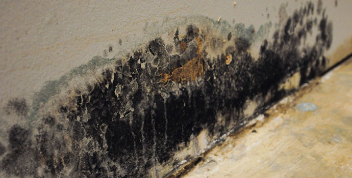 ServiceMaster mold removal and remediation, Kansas City