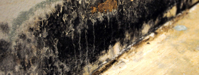 Mold Removal, remediation, and biohazard cleanup in Brookfield, WI