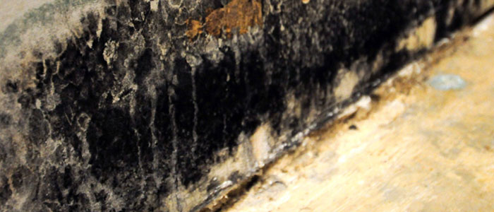ServiceMaster commercial mold removal and remediation green bay